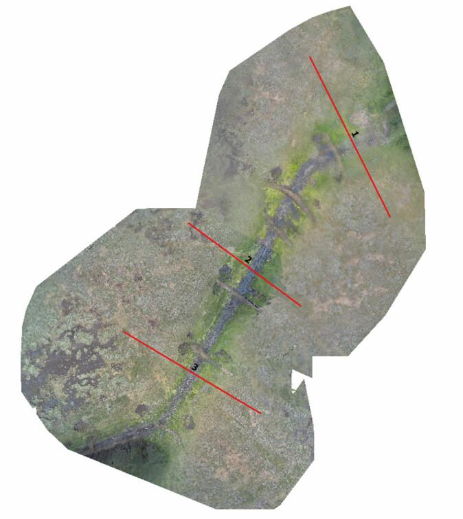 Bilder tatt med en drone over Kaldvassmyra viser tydelig hvor det er satt ned plugger i grøfta. De synes som grå streker tvers over grøfta. De røde strekene viser transektene der vi registrerte vegetasjonen. (Foto: Øyvind Hamre)