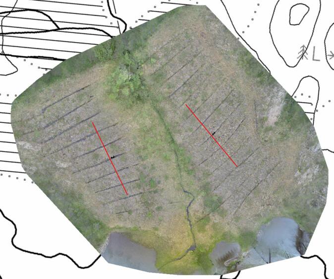 I Hildremsvatnet er ikke myrene restaurert ennå og her var målet å registrere førtilstanden. I dette området er det ikke en stor grøft, men mange grøfter fordelt pent og pyntelig over hele myra. Våre vegetasjonstransekt er markert med røde streker. (Foto: Øyvind Hamre)