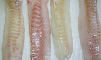 Blodig alvor for kvalitet på fisk