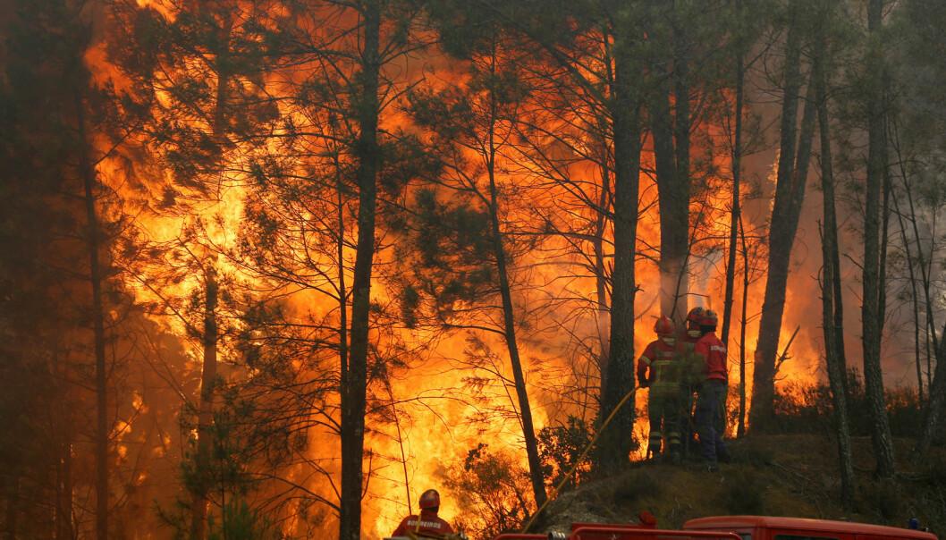 Portugal har hatt store problemer med skogbranner i juni. Her prøver brannfolk å få kontroll på en brann i Capelo midt i landet. (Foto: Rafael Marchante/Reuters/NTB scanpix)