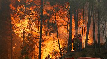 Skogbranner forurenser mer enn antatt