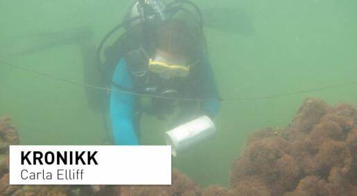 Dette kan verden lære av brasilianske korallrev