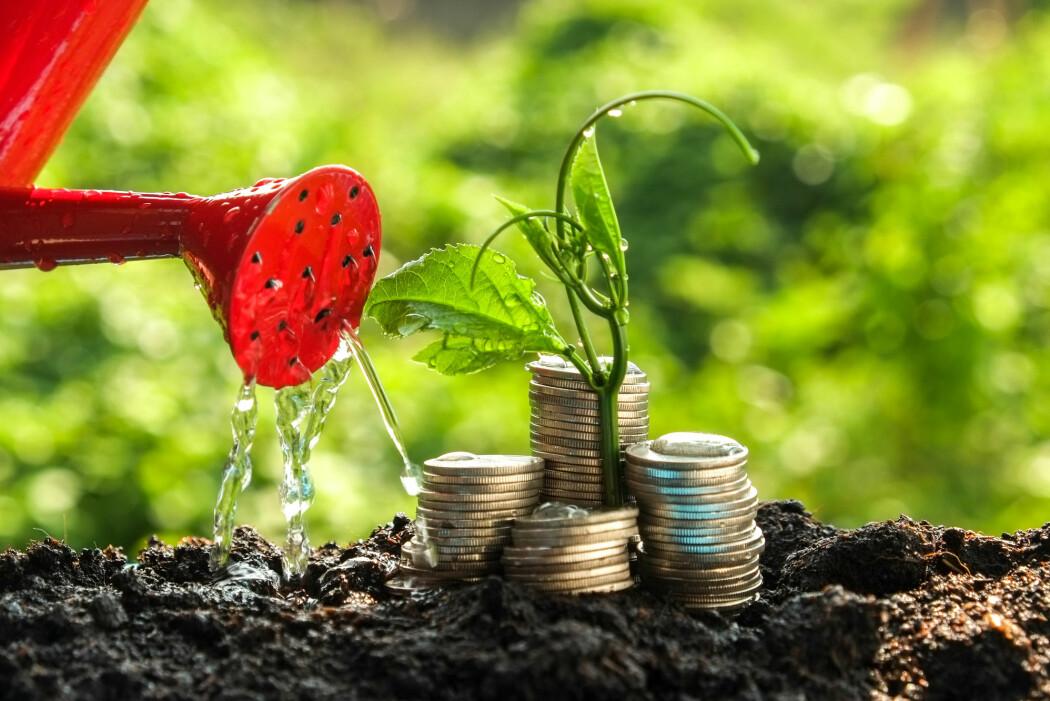 Natur og miljø må regnes om til pengeverdier før man kan lage en grønn BNP. (Foto: Nattapol Sritongcom / Shutterstock / NTB scanpix)