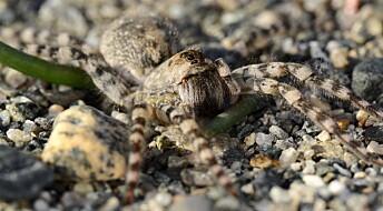 Ryddet plass for truet edderkopp