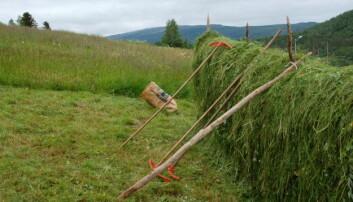 Forskere ved Nibio anbefaler at slåttemarkene behandles på tradisjonelt vis.  (Foto: Bolette Bele)