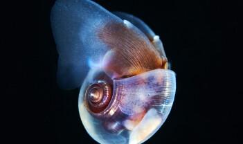 Makrell har et kosthold til besvær