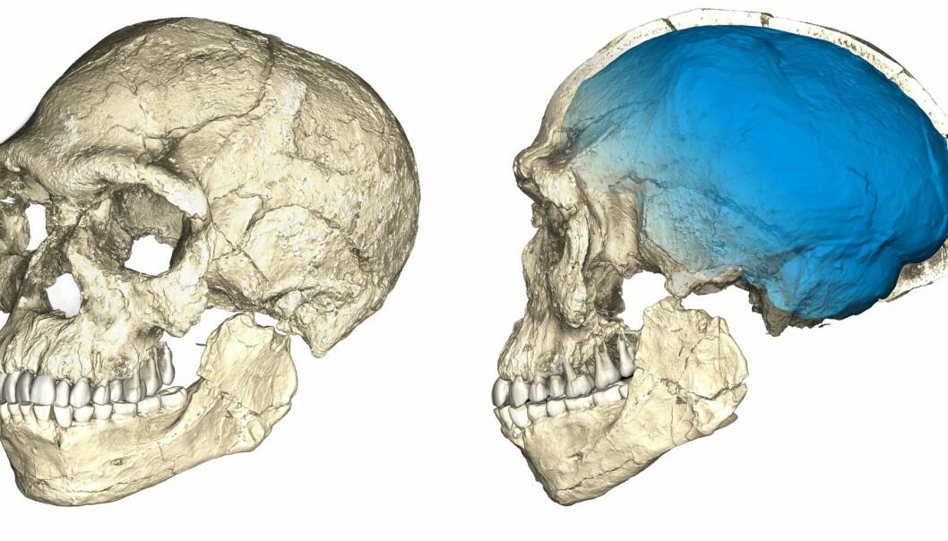 Dette er den rekonstruerte hodeskallen til mennesket som ble funnet i Jebel Irhoud i Marokko. Men hvor ulike oss var egentlig dette mennesket? (Foto: Philipp Gunz, MPI EVA Leipzig)
