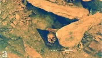 Slik lå Ava da arkeologer gravde henne fram i 1987. I graven lå det også et klokkebeger og noen få redskaper. Navnet Ava fikk hun etter stedet Achavanich i Skottland der hun ble funnet. (Foto: forskningsartikkelen / Highland Council)