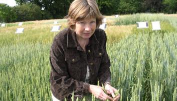 Anne Kjersti Uhlen er professor ved NMBU. (Foto: NMBU)