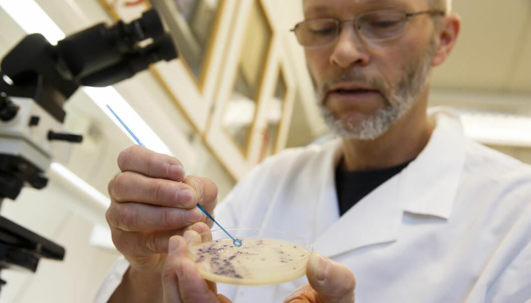 Antibiotikaresistente bakterier truer mange fremtidige kreftpasienter, som er avhengig av antibiotika etter noen behandling. Kreftforeningen startet denne uken en kampanje mot overdreven antibiotikabruk. Her er motstandsdyktige MRSA-bakterier ved Veterinærinstituttet i Oslo. (Foto: NTB/Scanpix)