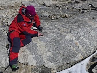 Prosjektleder for geologi-ekspedisjonen Synnøve Elvevold studerer oppsmeltning av gneisene i fjellmassivet Jutulsessen. De opprinnelige smeltene danner lyse årer i berget, mens de grå delene utgjør den eldre gneisen (foto: Ane K. Engvik).