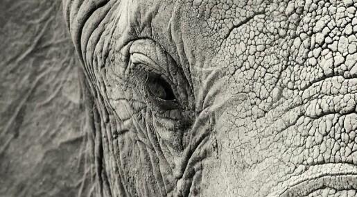 Jeg vil ha elefant til jul!
