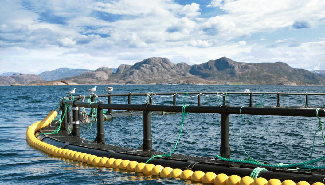Fiskeri- og Havbruksnæringens Forskningsfond har samlet erfaringer fra ulike metoder for lakselusbehandling uten medisiner.  (Illustrasjonsfoto: Colourbox)