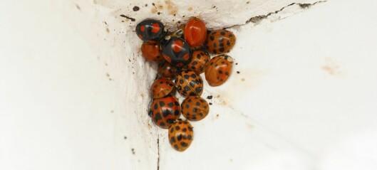 Hva skjer med insektene om vinteren?