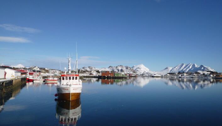 Norske forskere har funnet forskjeller mellom skrei og kysttorsk ved å sekvensere arvestoffet. Det kan bli et verktøy for å sikre bærekraftig forvaltning av torsken. (Foto: Sissel Jentoft)