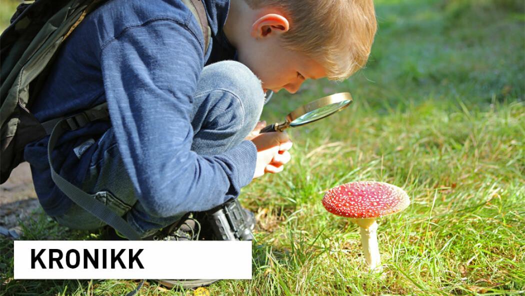 Forskere får stadig mer kunnskap om norsk natur. Over 100 norske arter har fått kartlagt genene sine, inkludert rød fluesopp. (Foto: iStock)