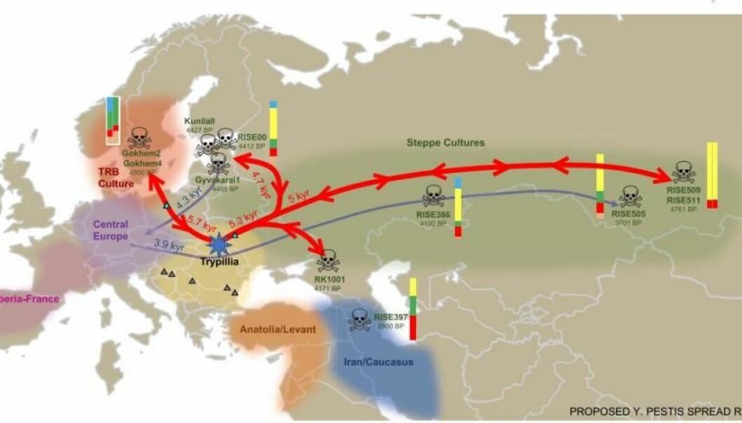 Forskernes beskrivelse av pestens vei rundt i Europa, med tilhørende funn og dateringer. Det eldste er Gökhem2, som er kvinnen fra Sverige. De fargede strekene ved siden av funnene viser den genetiske sammensetningen, og selve fargene indikerer hvilket område de stammer fra genetisk. BP står for «before present» – altså år før vår tid. (Illustrasjon: Rascovan et al.)