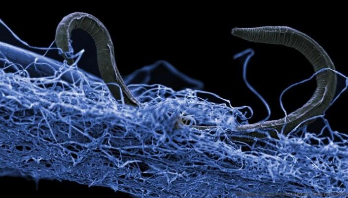 Livet under jordskorpa: Mystiske mikrokryp lever av stein og radioaktivitet flere kilometer inne i jorda