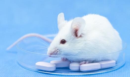 Mitt liv som mus