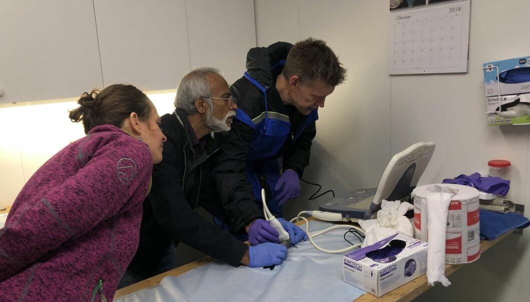 Her bruker forskerne ultralyd på polar torsk for å finne ut hvilket kjønn den har. (Foto: Jasmine Nahrgang)