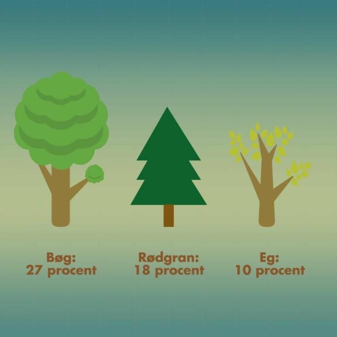 De danske skogene består mest av bøk, som kan holde på 65 tonn karbon per hektar etter 30 år. Gran kan holde på hele 90 tonn ved samme alder.