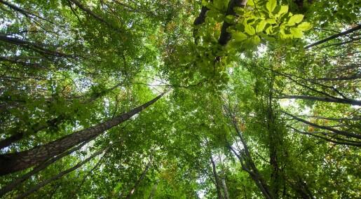 Forskere: Du kan ikke kompensere for flyreiser ved å plante trær