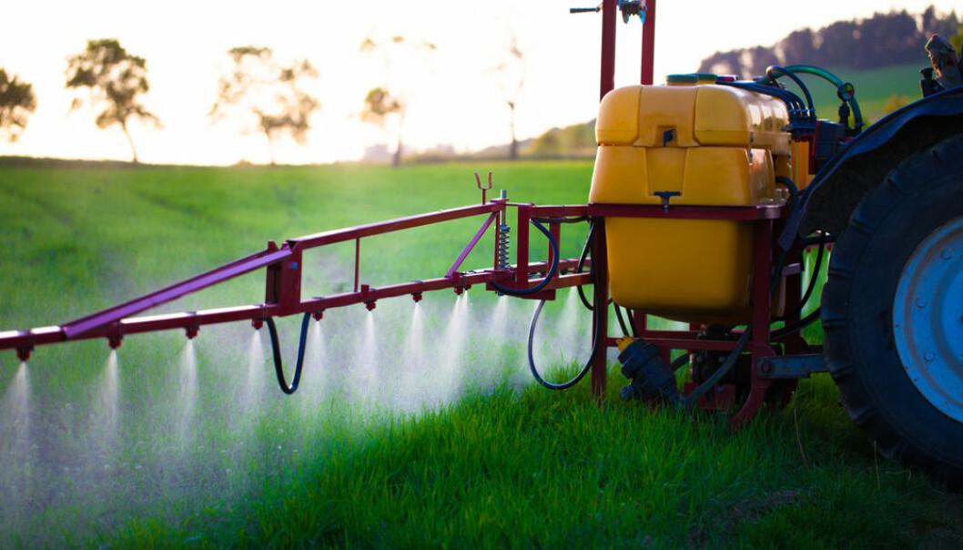 Ein finn også restar av plantevernmiddel i dyrefôr som ein nyttar i landbruket. (Foto: Shutterstock / NTB scanpix)