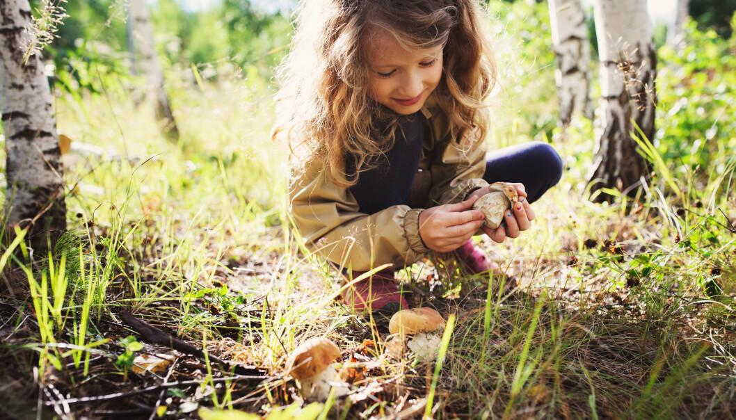 Professorene skal skrive hvert sitt kapittel i en rapport som ser nærmere på alle de ulike formene for naturverdier og hvordan naturen beriker menneskeheten. (Illustrasjonsfoto: Maria Evseyeva / Shutterstock / NTB scanpix)