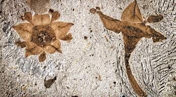 Denne blomsten overlevde da dinosaurene døde ut