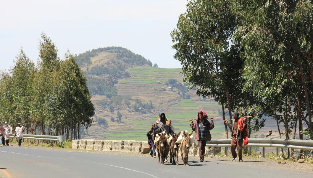 Lettere for kvinner å eie jord i Etiopia med landregistrering