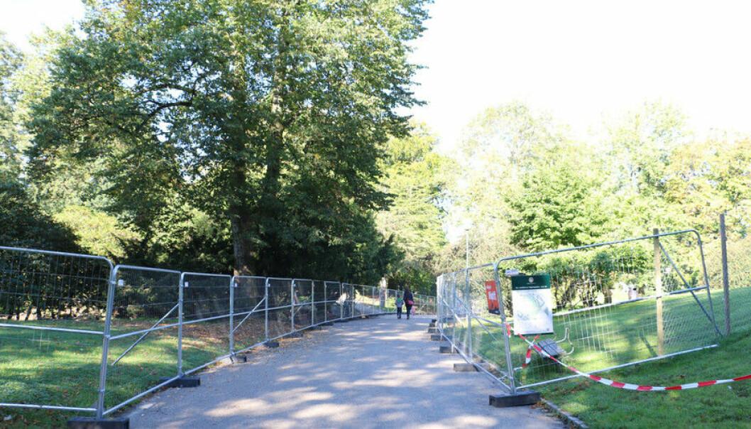 Øvre del av Nygårdsparken har vært stengt i nesten tre år. En ny rapport viser hva som har skjedd med rusmiljøet etter at det ble flyttet fra parken i 2014.  (Foto: Dag Hellesund)