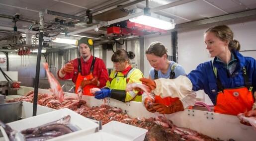 Slik sjekkar forskarane korleis det går med livet i Barentshavet