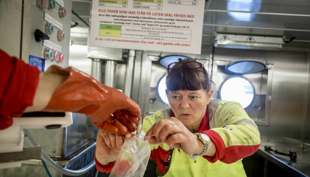 Forskar Irene Huse tar imot ein nullåring til frysen. (Foto: Erlend A. Lorentzen / Havforskingsinstituttet)