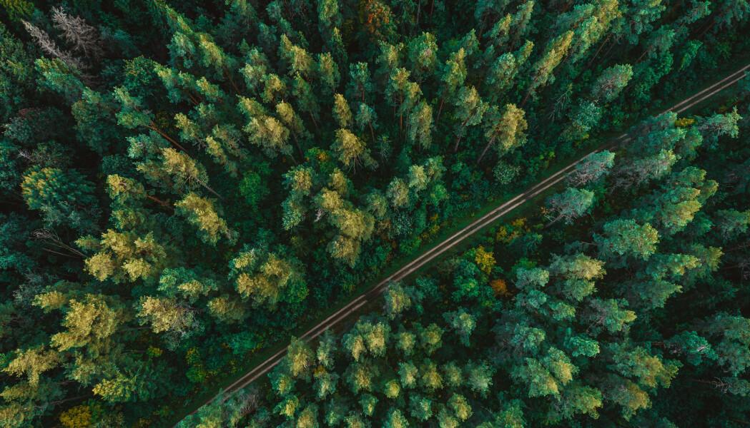 Fibermassen fra trærne kan gjøres om til klær. (Foto: Aleksandrs Muiznieks / Shutterstock / NTB scanpix)