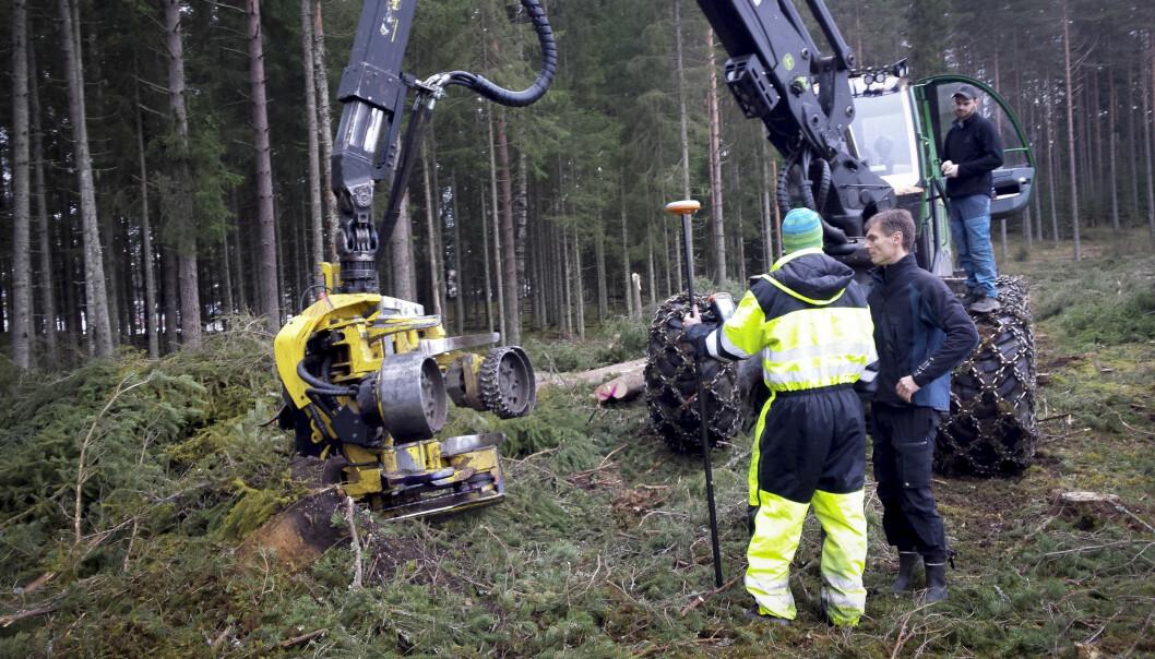 Ved å kombinere målinger fra hogstmaskiner med skanninger av skogsområder, kan forskere peke ut hvor trærne som egner seg best til for eksempel papir, står.  (Foto: Knut Marius Hauglin)