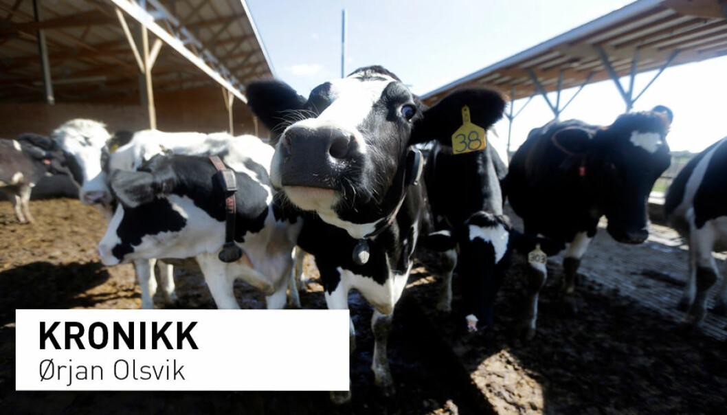 – Et viktig middel for å oppnå disse resultatene så hurtig var at disse medisinsk viktige antibiotika ikke lengre kan kjøpes i butikken av den enkelte bonde i USA, skriver kronikkforfatteren. (Foto: Jeff Roberson / AP Photo / NTB scanpix)