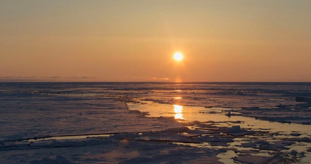 Dyreplankton på Nordpolen oppfører seg annerledes enn plankton andre steder i verden på grunn av sola. (Foto: Jørgen Berge)