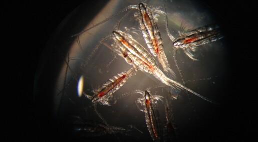 Dyreplankton på Nordpolen svømmer sin egen vei