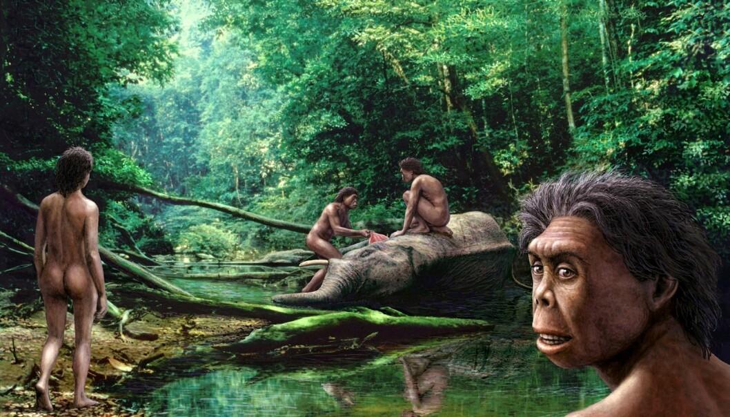 På øya Flores i Indonesia var Floresmennesket en dverg på 25 kilo. Elefanten de har felt på denne illustrasjonen er en dverg-stegodon, en nå utdødd skapning som ligner på en dvergelefant. Men Flores-kjemperotten, som de også jaktet på og spiste, gikk motsatt vei. Den kan bli mer enn dobbelt så stor som en vanlig brunrotte og trives fortsatt på øya. (Illustrasjon: Science Photo Library, NTB scanpix)