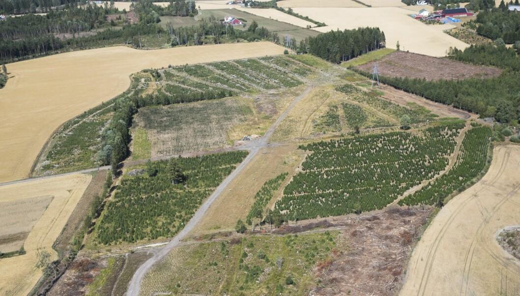 2018 var ikke noe godt år for bøndene i Sør-Norge. Tørke ødela avlingene mange steder og det ble meldt om at dyr ble slaktet på grunn av formangel. (Foto: Berit Roald / NTB scanpix)