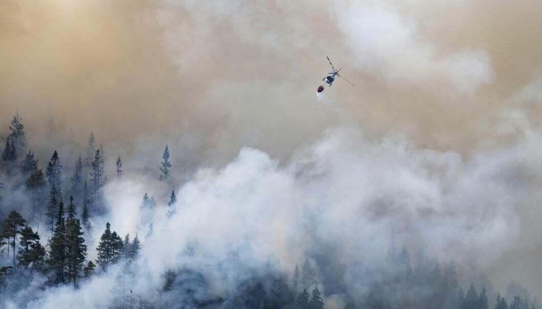 Sommeren 2018 ble den mest ekstreme skogbrannperioden i Norge noensinne. Bildet ble tatt i Setesdalen i juli. (Foto: Tor Erik Schrøder / NTB scanpix)