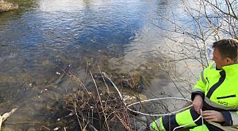 Hvorfor er det mer miljøgift i fisk fra Tyrifjorden?