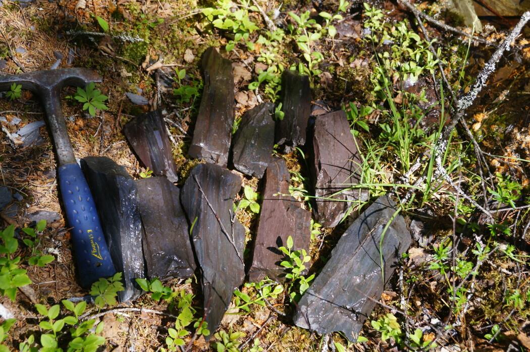 Disse bryneemnene er funnet i Mostadmarka. Stein fra dette området har blant annet endt opp i Danmark. (Foto: NGU)
