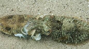 Romantisk blekksprut-drama filmet for første gang