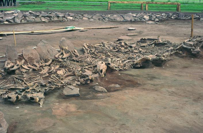 Noen av hestene som er studert stammer fra denne skytiske graven funnet i Sibir i Russland, nær Mongolia. (Foto: Michael Hochmuth, German Archaeological Institute, Berlin)