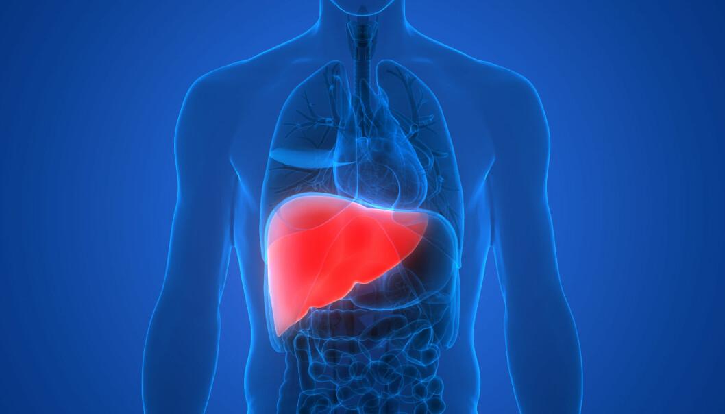 En lever som er angrepet av kreft, er svært utfordrende å behandle. (Foto: Shutterstock / NTB Scanpix)