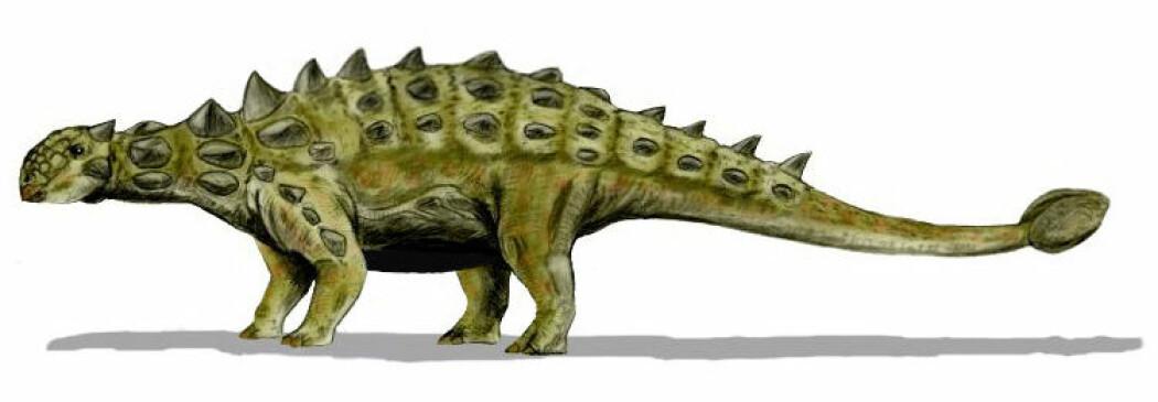 Euoplocephalus var pansret fra topp til tå. Klubben på halen brukte den til å forsvare seg med. Med en svær kropp og tung rustning er det lett å bli for varm. (Illustrasjon: Nobu Tamura. Wikimedia Commons, CC 3.0)