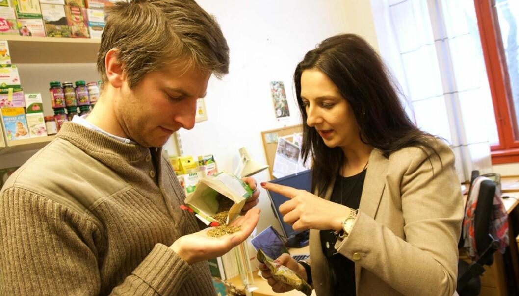 Hugo de Boer og Ancuta Cristina Raclariu ved Naturhistorisk museum i Oslo har undersøkt hvilke planter som virkelig finnes i kosttilskudd med johannesurt. I ganske mange av dem fantes det i hvert fall ingen johannesurt.  (Foto: Ingrid Spilde)