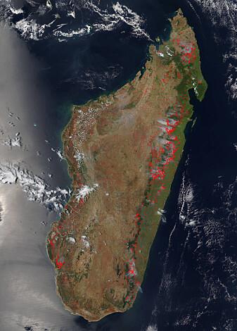 Dette satelittbildet fra 2015 viser skogbranner på Madagaskar. De unike skogene brennes som en del av landbrukets praksis med svedjebruk. (Foto: NASA)