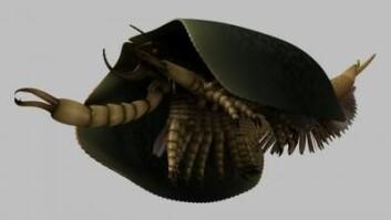 Tegningen illustrerer hvordan dyret kan ha sett ut. Foran hadde det store klør med tagger som det brukte for å fange byttet. (Foto: Lars Fields/Royal Ontario Museum)